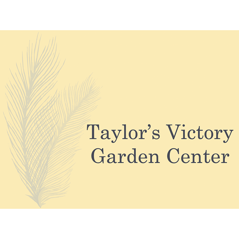taylors victory garden